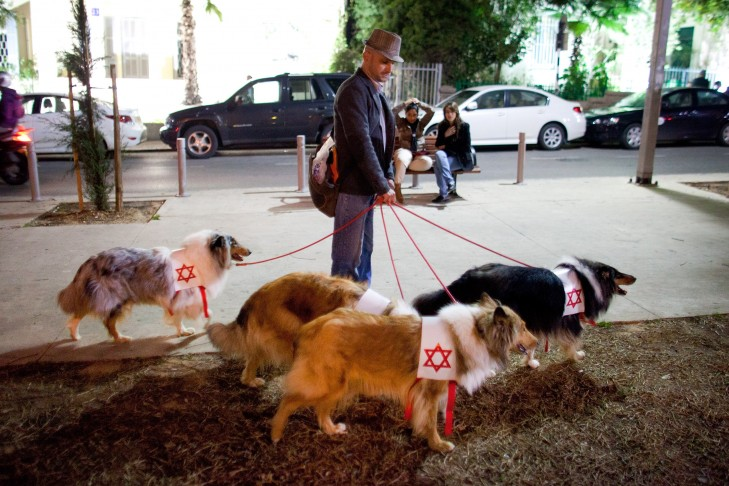 Man with dogs takes part in a 'Zombie Walk' during the Jewish holiday of Purim in Tel Aviv.  (Photo by Uriel Sinai/Getty Images)