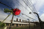 A rose that was left by a visitor hangs on the high voltage fence surrounding the Auschwitz concentration camp  (Photo by Christopher Furlong/Getty Images)