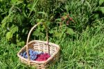 blueberries-and-raspberries-basket_picnik