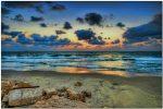 (Photo: Ron Shoshani)