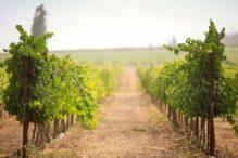 clos-vineyards