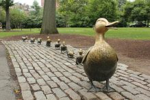 """""""Make Way for Ducklings"""" (Courtesy photo)"""