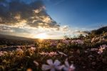 (Photo: Quinsey Sablan/Unsplash)
