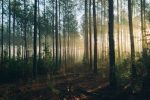 (Photo: Steven Kamenar/Unsplash)