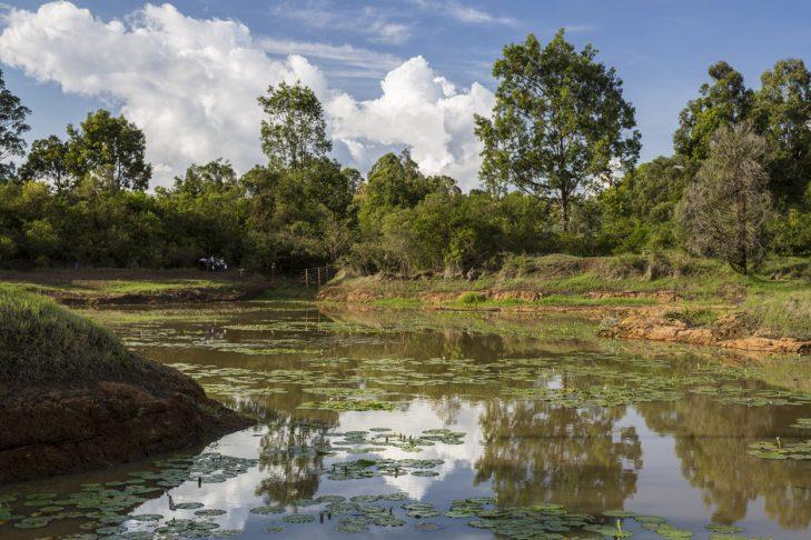 Karura Forest (Photo: flickr/Ninara)