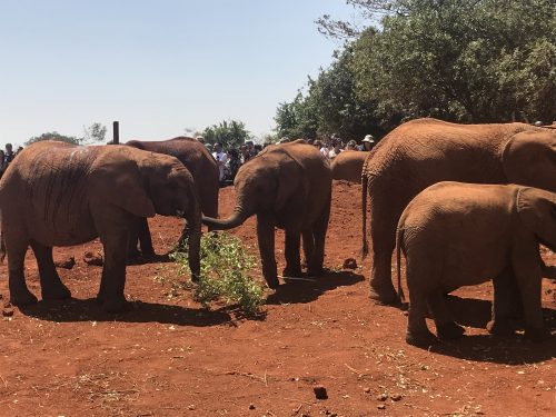 Elephants playing and drinking at the watering hole (Courtesy photo)