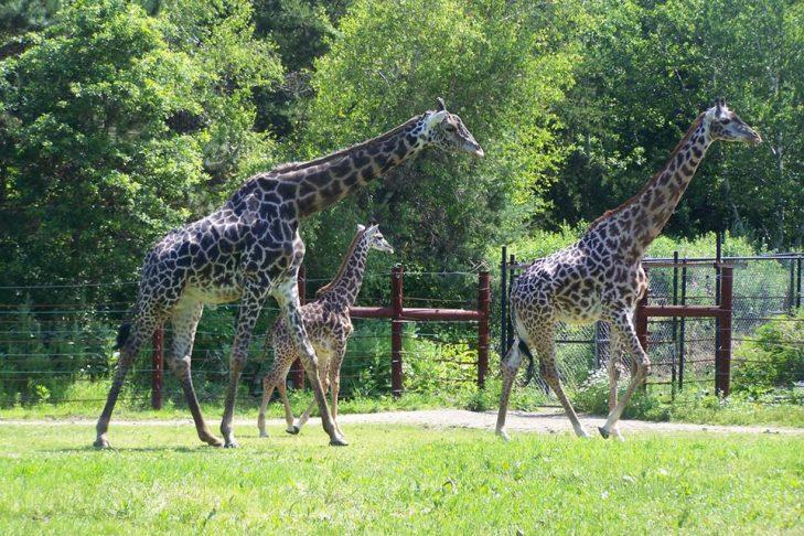 (Courtesy photo: Franklin Park Zoo)