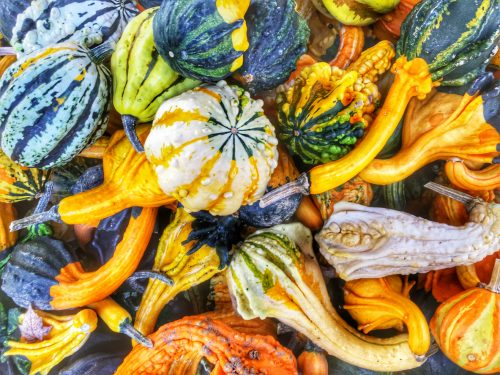 Pile of multicolored gourds