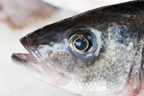 Close up of fish head.