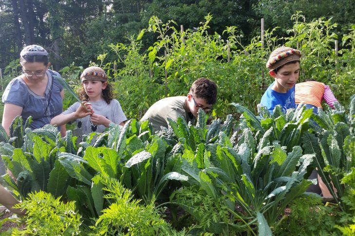 Harvesting at the Interfaith Community Garden (Photo: Paula Jacobs)