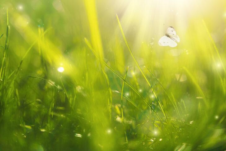 (Photo: Amax Photo/iStock)