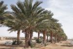 R&D palm trees