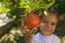 boy with pomegranate