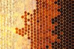 Honey in frame. Texture design.