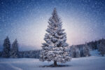 Idyllic winter scene: Pine tree covered with snow.