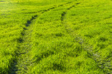 Traces from the wheels of car on the green grass. Outdoor sunny view of fresh green field with the trace of vehicle wheel mark in countryside area.