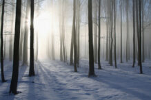 Sunlight falls into the winter deciduous forest on a foggy morning. Photo taken in December.