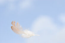 Feather in the air