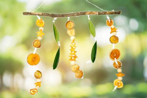 Sukkot Citrus Mobile Featured Image