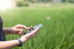 Smart farming Agricultural technology and organic agriculture Woman using smartphone in rice field - Blank screen mobile phone for graphic display montage