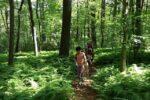 walking on trail ferns
