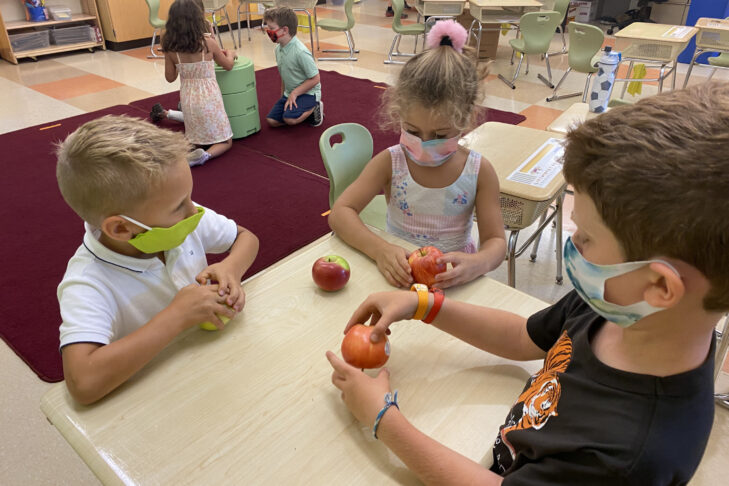1st Graders in a classroom examining apples